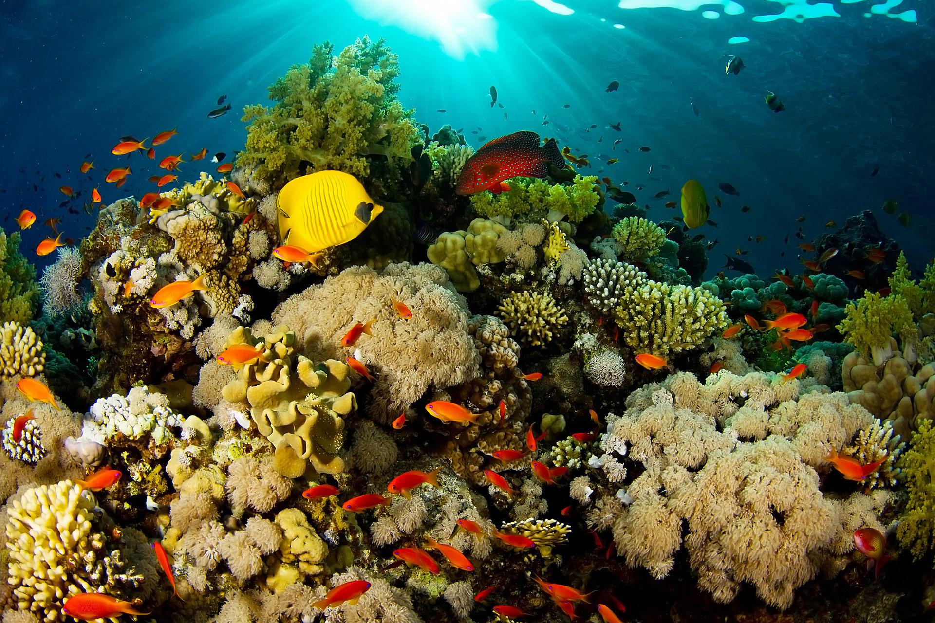 337113_voda_-more_-ryby_-korally_1920x1280_(www.GdeFon.ru)
