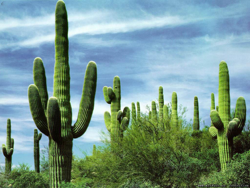 mexico_cactus_2